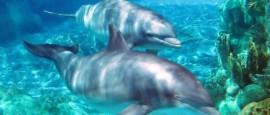Contaminación acústica en los océanos